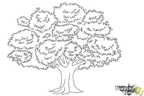 How To Draw A Realistic Tree