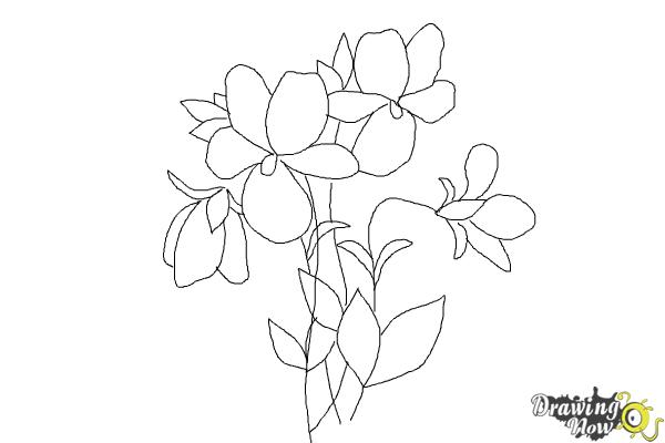 Step 11 trace your drawing with a black pen and erase the pencil sketches after how to draw simple flowers