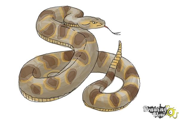 How to Draw a Realistic Snake - Step 9