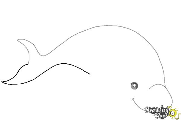 How to Draw a Dolphin - DrawingNow