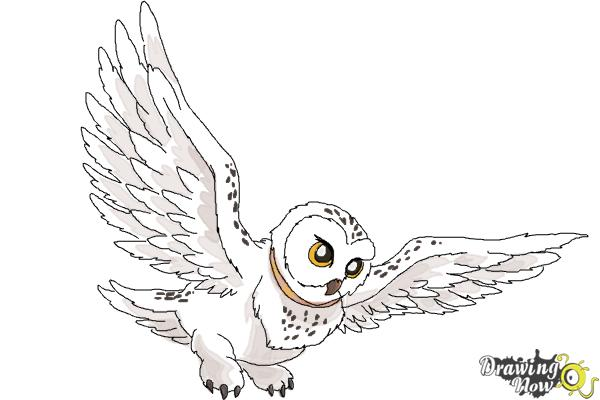 How to Draw Hedwig from Harry Potter - Step 11