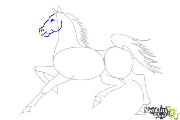 How to Draw a Horse (Ver 2) - Step 9