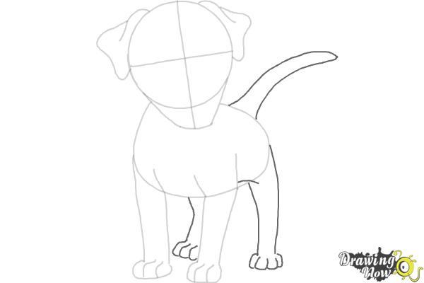 How to Draw a Dog - Step by Step - Step 5
