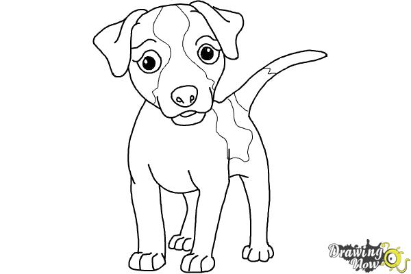 How to Draw a Dog - Step by Step - Step 8