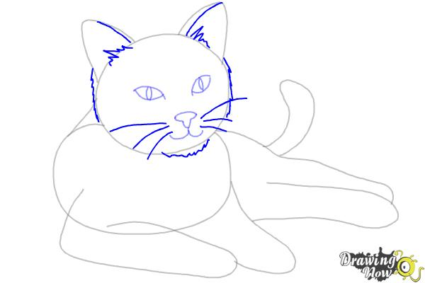How to Draw a Cat - Step 7
