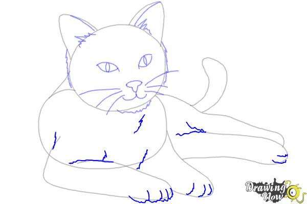 How to Draw a Cat - Step 8
