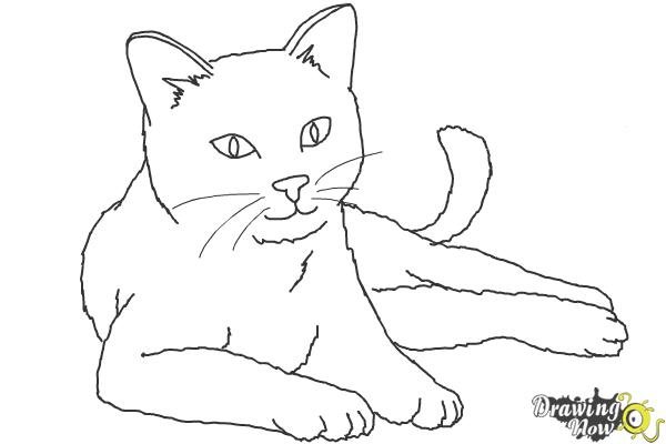 How to draw a cat step by step drawingnow how to draw a cat step 9 altavistaventures Gallery