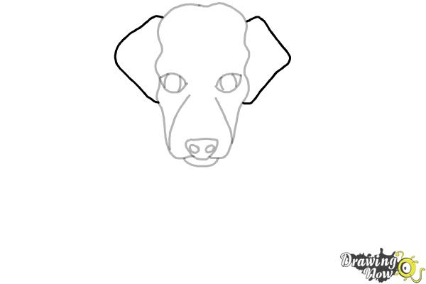 How to Draw a Puppy - Step 4