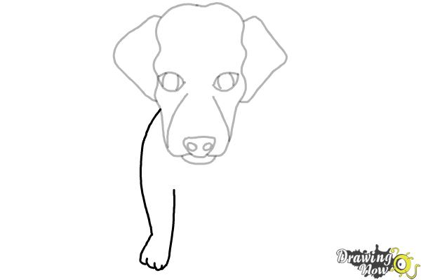 How to Draw a Puppy - Step 5
