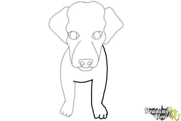 How to Draw a Puppy - Step 6