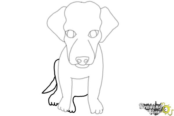 How to Draw a Puppy - Step 7