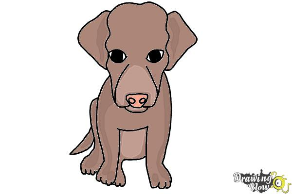 How to Draw a Puppy - Step 8