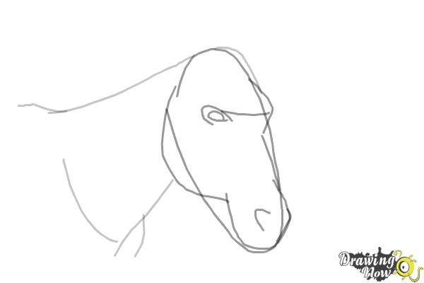 How to Draw a Horse Head - Step 4