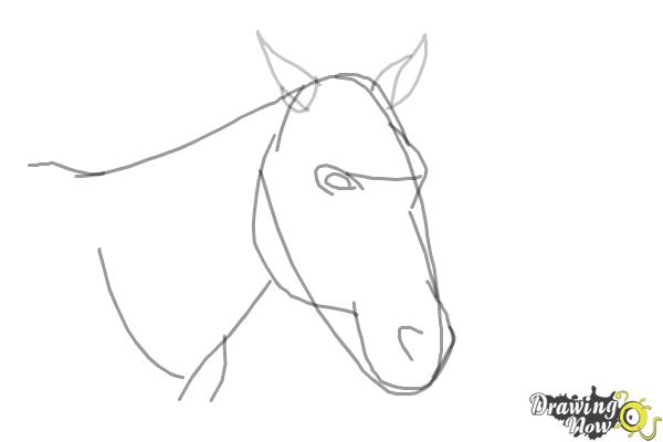 How to Draw a Horse Head - Step 5
