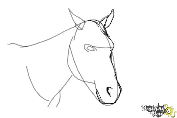 How to Draw a Horse Head - Step 6