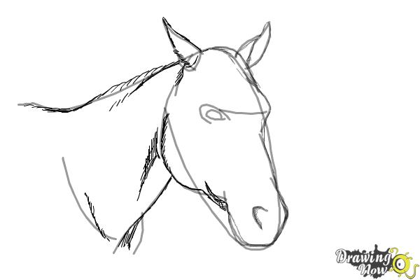 How to Draw a Horse Head - Step 7