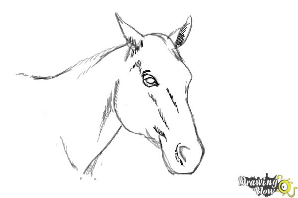 How to draw a horse head step 8