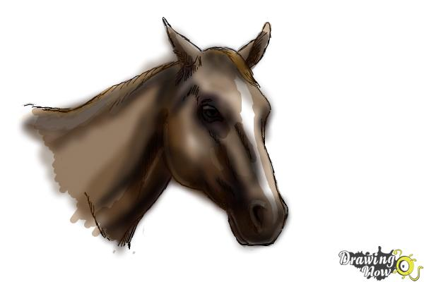 how to draw a horse head drawingnow