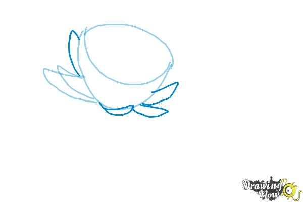 How to Draw a Lotus Flower, Water Lily - Step 3