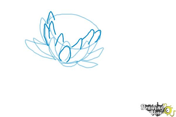 How to Draw a Lotus Flower, Water Lily - Step 5