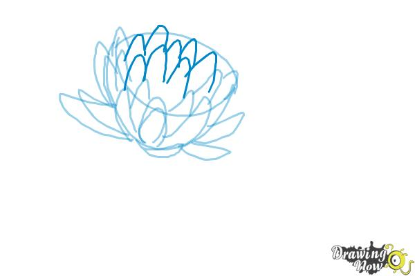 How to Draw a Lotus Flower, Water Lily - Step 6