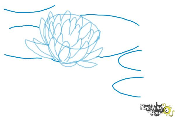 How to Draw a Lotus Flower, Water Lily - Step 7