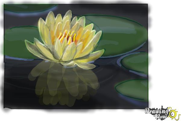 How to Draw a Lotus Flower, Water Lily - Step 8