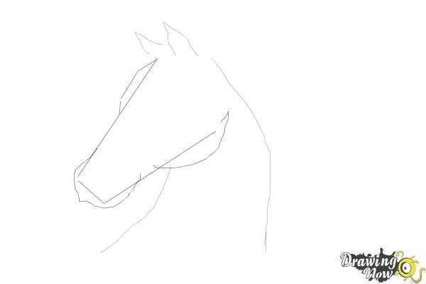 How to Draw a Horse Head Step by Step - Step 3