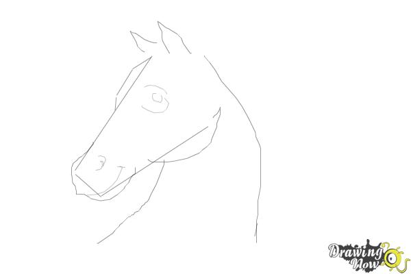 How to Draw a Horse Head Step by Step - Step 4