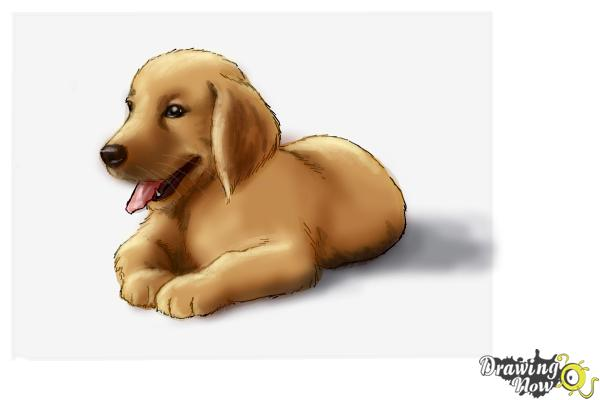 how to draw a golden retriever puppy drawingnow