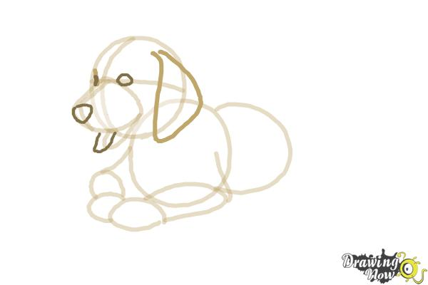 how to draw a labrador retriever puppy step by step
