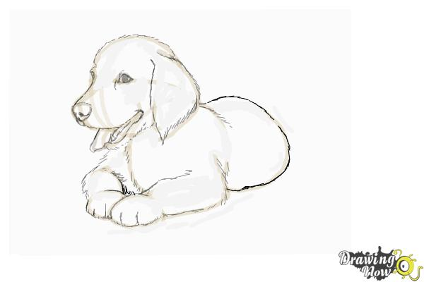 Free Dog Coloring Pages Realistic