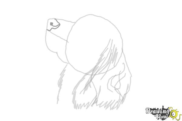How to Draw a Cocker Spaniel - Step 6
