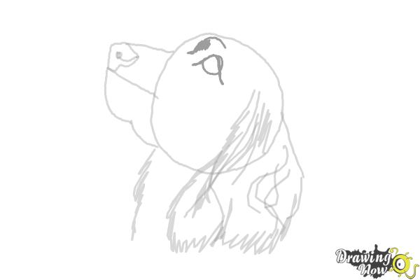 How to Draw a Cocker Spaniel - Step 7