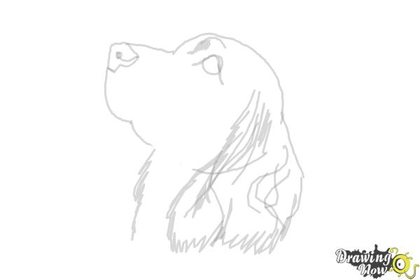 How to Draw a Cocker Spaniel - Step 8