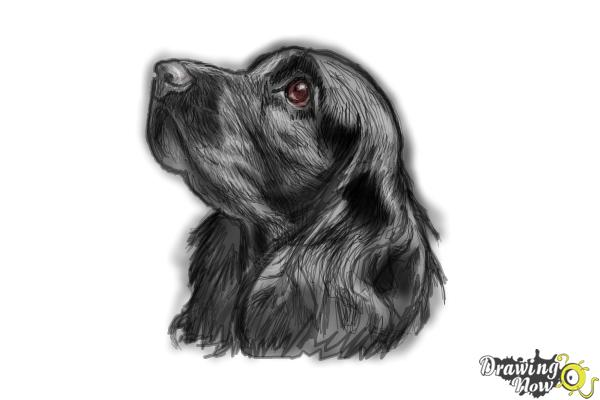 How to Draw a Cocker Spaniel - Step 9